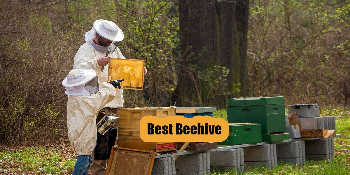 [Top 5] Best Bee Hive Kits Review & Buying Guide [2020]