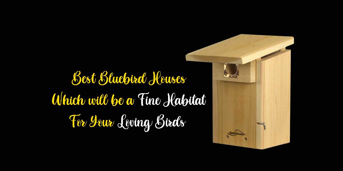 [Top-10] Best Bluebird Houses Which will be a Fine Habitat for Your Loving Birds