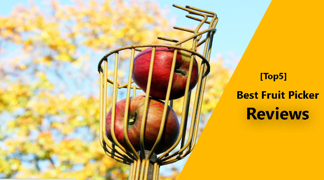 [Top 5] Best Fruit Picker to Buy in 2020 (Reviews)