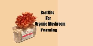 [Top 5] Best Kits for Organic Mushroom Farming in [2021]