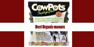 [Top 5] Best Organic manure Reviews & Buyer's Guide [2020]