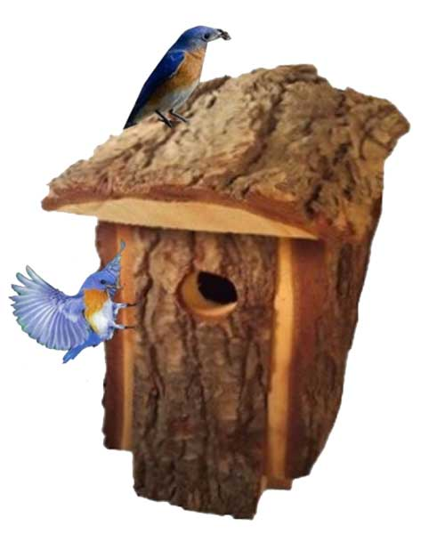 Bluebird house for an outdoor backyard rustic natural wood looking pine to attract bluebirds and other small birds