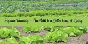 Organic Farming – The Path to a Better Way of Living