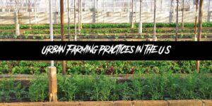 Urban Farming Practices in the U.S