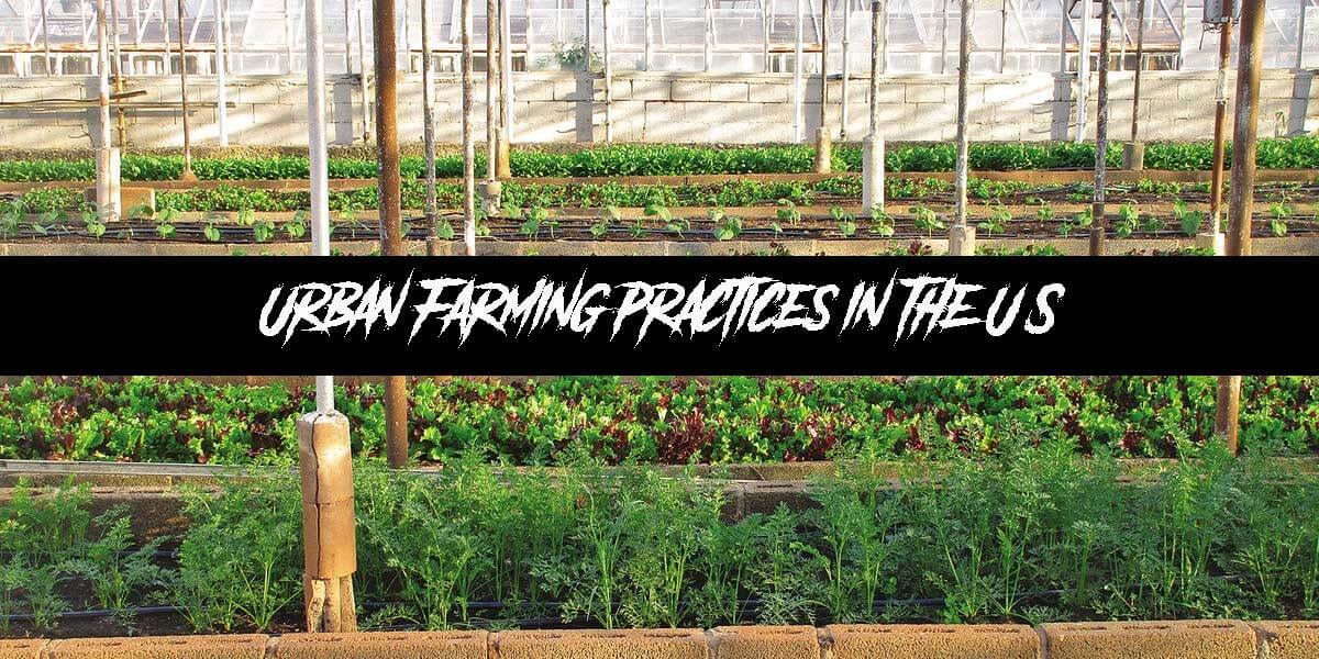Urban Farming Practices in the U.S