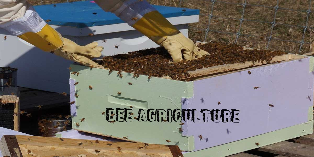 You are currently viewing Everything you need to know about Bee Agriculture