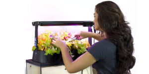 The Best Aquaponics Garden Reviews & Buying Guide [2021]