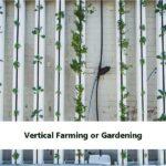 Vertical Farming or Gardening