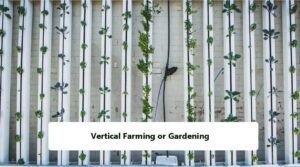 Vertical Farming or Gardening