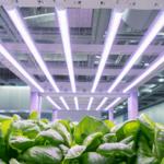 Advanced Platinum LED Grow Lights – Guide