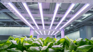 Read more about the article Advanced Platinum LED Grow Lights – Guide