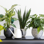Cognitive Skills Improvement by Your Attractive Indoor Garden or Plants