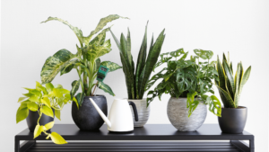 Read more about the article Cognitive Skills Improvement by Your Attractive Indoor Garden or Plants